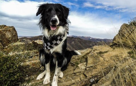 How to: Hike With Your Pup in the Wasatch