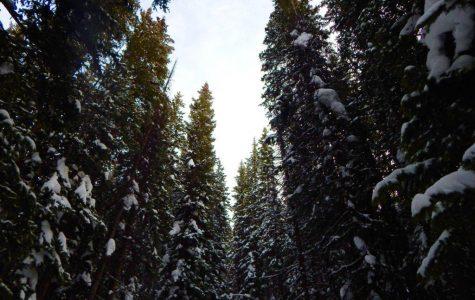 Snowshoeing Guardsman Pass