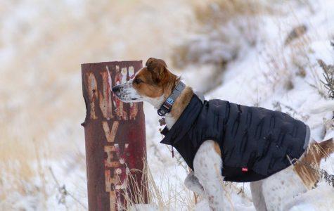Logging the Winter Miles