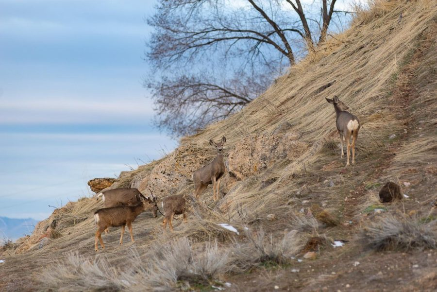 Chronic+Wasting+Disease%3A+The+Rare+Disorder+Threatening+Utah%27s+Deer+Population