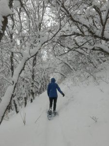 A Wasatch Winter Five Ways